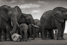 Photography / Mostly Nick Brandt because he's amazing