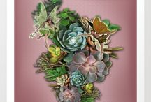 Succulent  stories / Most of these product designs come from the photos i took of my own succulent garden in Clovelly.