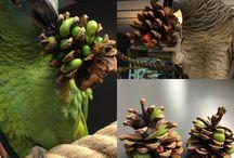 parrots diy