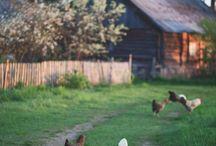 Mitt småbruk / Enn så lenge får småbrukdrømmen leve ut igjennom disse bildene og min fantasi.