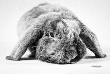 Animaux / Photographies d'animaux domestiques en général.