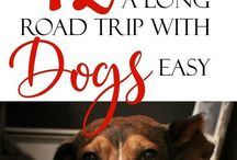 RVing with Dogs / Check out this board for great tips and ideas for RVing with pets. From dog friendly activities to get products and gadgets that making RV travel much easier with your dog.