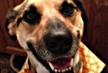 My GG / Photos of my Dog