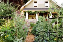 Yards & Gardens / Garden and yard ideas for homes in the pacific northwest. Great tips to use when getting your house ready to sell or for fixing up a newly purchased house. Homeowner tips, yard and garden tips.