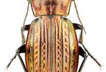 Insect. Насекомые