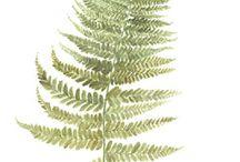 Obrazki roślin
