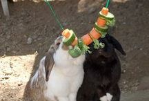 Kaninchen Ideen