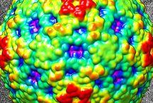 Viruses-Parasites- Bacterias