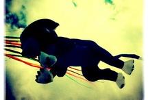 Kites / by Giorgio Tognacci