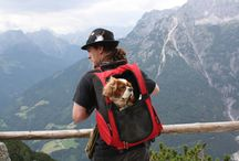 Select Travel With Dogs