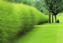 Landscaping/Gardening