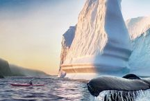 Newfoundland <3