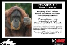 Fundraising for No More Suffering