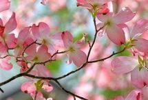 Color - Rose