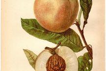 Peaches for my Peach