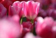.Flores.