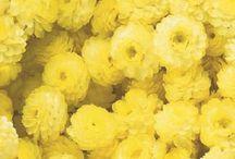 Yellow Colour Plants