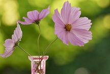 Floral arrangements / Flowers