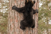 WRI study bears