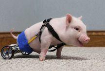 Animales mutilados pero recuperados / Estos animalitos fueron mutilados en accidentes pero gracias a las personas pueden volver a caminar y moverse.