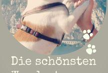 Wandern mit Hund / Wandern und Outdoorerlebnisse mit Hund(en) Die schönsten Touren in Europa