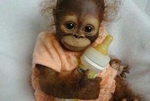 •Monkeys babes•