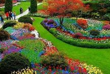 Jardinagem | Gardening