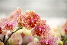 Orchids! / by Dolita Martin