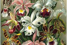 Arte com Orquídeas