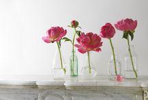 Flores*