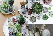 Living // Plants