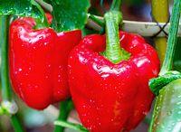 pěstování zeleniny a ovoce