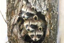 сурки в дереве