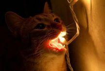 Cats  / by Jessy Kinman