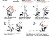Training Tips / Training tips for your canine friends!