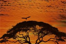 { Africa ♥ } / by Em Bee