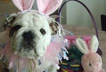 easter / Follow us on Facebook https://www.facebook.com/furbabiesarethebestbabies