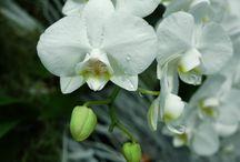Növények gondozása / Caring for plants