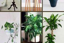 plantes fleurs jardinage
