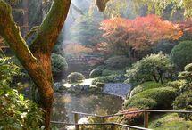 Japanese / Japanese themed gardens