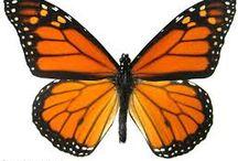 MonarchButterflyDesigns