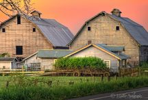 BARNS / by Phyllis Edwards