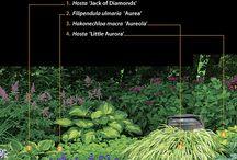 rostliny hosta a tráva