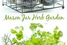 bilinky,záhrada