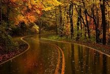 Bridges,Roads and Pathways