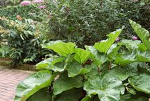 jardinage :)