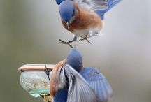 ptaki i ptaszki