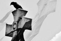 Le Stirpi dei Non Morti - Manoscritto Antico / 'Der Ursprung', l'origine, una parola che rappresenta molto di più rispetto al suo significato: un manoscritto carico di segrete verità. Tempi diversi che tramite i punti di vista dei personaggi, scorrono e svelano quel che accade. E il segreto non sarà più tale. I nemici saranno amici. Ma sarà la via giusta?