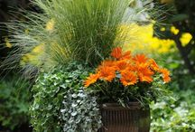 landscaped ideas