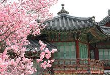 Japan & Seoul